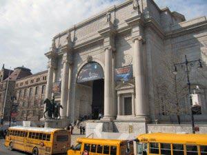 musee-histoire-naturelle
